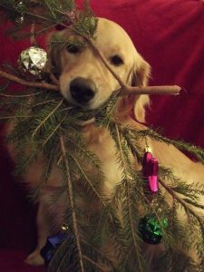 Dogs friendly Nights at Christmas Magic