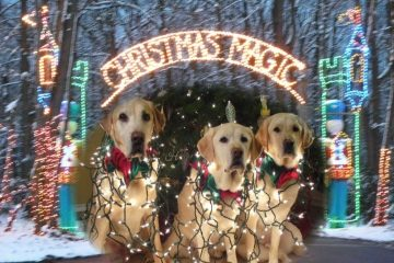 Dogs welcome at Christmas Magic