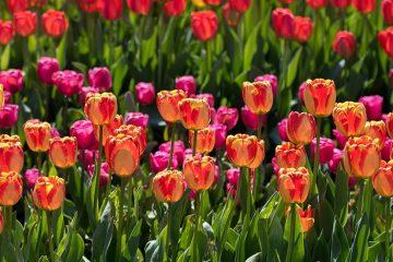 Towson Garden Day